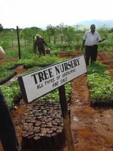 Tree Nursery (480x640)