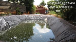 fishpond with protective net