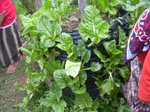 photo Spinach in sack