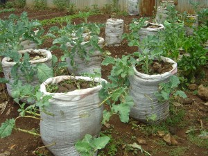 photo sack gardens